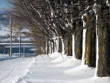 les arbres en enfillade