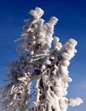 Artefact de neige