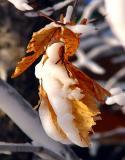 Etude de feuilles
