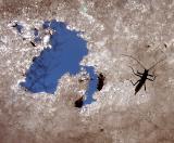 Premier insecte du printemps