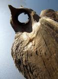 L'oiseau de bois