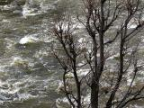 L'arbre devant la rivière
