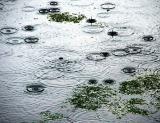 Pluie sur l'étang