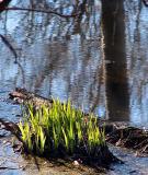 À contrejour dans les marais