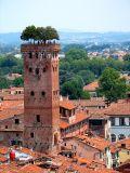 Lucques,  la tour au jardin perché dite Torre Guinigi