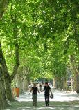 Annecy, l'allée d'arbres
