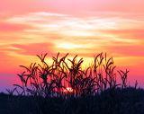 Chianti, le coucher de soleil derrière les blés