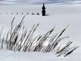 survivants de l'hiver