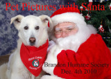 Our dogs Bandit , Shadow & Ace and lots of pet photos