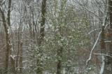 our first snow at 4 Fawn