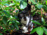 Talus the cat