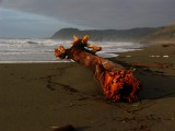 Storm casualty on Pistol River Beach