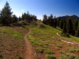 PCT approaching Carter Meadows summit