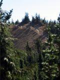 Mountain Goats  seen hiking single file across Cispus Pass