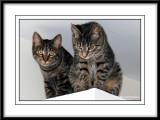 Maya & Minnie