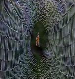 Nature's Web Site