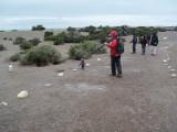 6 Punta Tombo Argentina 20101104.jpg