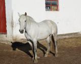 11 Estancia La Angostura Argentina 20101109b.jpg