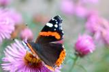 21st September 2008  butterfly