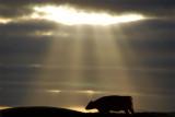 8th November 2008  light breaks through