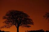 20th December 2008  tree at night