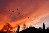 23rd December 2008  birds