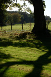 25th September 2009  long shadows