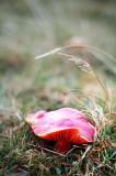 29th October 2010  mushroom