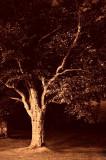 12th October 2012  Rainy night