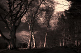 6th March 2008  the woods in moonlight