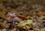 among faded woods..