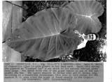 081975_big plant.jpg
