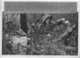 090372 plane crash_1.jpg
