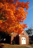 Fall Leaves at a Catholic Church