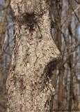 Arbre en forme de figure humaine // Human face tree
