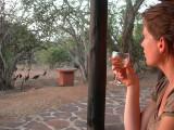 crestedguineafowl.jpg