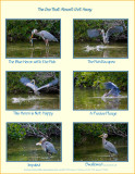 The One that Almost Got Away...a single entry gallery. Life and Death in the Mangrove Swamp.