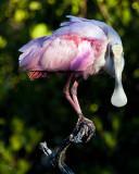 At The National Wildlife Refuge on Sanibel Island, Florida