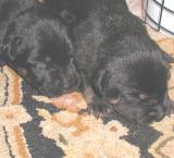 Orpheus Puppies 119.jpg