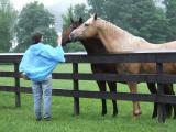 Horses greet Paula1676.JPG