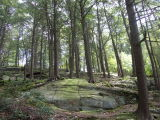 09 10 06 Joint NYMS/COMA Walk & Picnic at Fahnestock State Park