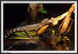 Aquarium - IMG_0732.jpg