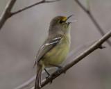 Turks and Caicos Islands - Birds