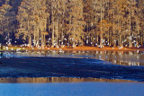lake_munson