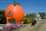 The Big Orange ~ Gayndah