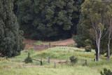Flooding ~ April 2009