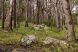 Mt MacKenzie Nature Reserve