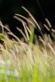 Grass Waving