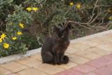 Kitten in Tangier