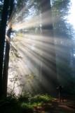 4675 Redwoods NP.jpg